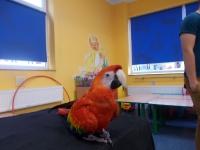 Wystawa ptaków egzotycznych. Zdjęcia wspólne 16.10.2015